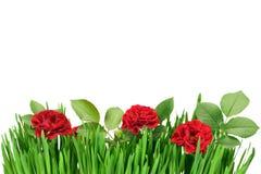 Rose dans l'herbe Images stock