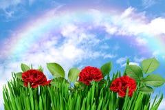 Rose dans l'herbe Image libre de droits