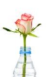 Rose dans la bouteille Images stock