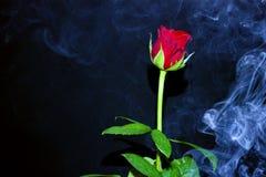 Rose dans la fumée Photos stock