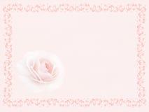 Rose dans la trame Image libre de droits