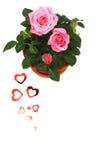 Rose dans le bac en céramique Images stock