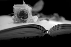 Rose dans le livre Photo libre de droits