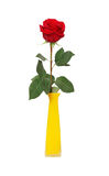 Rose dans le vase Image stock