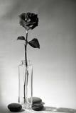 Rose dans le vase Photos libres de droits