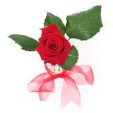 Rose dans le vase Photographie stock libre de droits