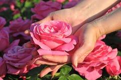 Rose dans les mains Images stock