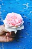 Rose dans les mains Images libres de droits