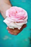 Rose dans les mains Photos libres de droits