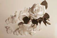 Rose dans un vase Photographie stock libre de droits