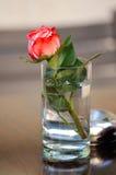 Rose dans un verre d'eau Photos libres de droits