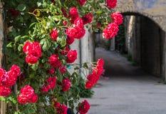 Pontaix,drome,france. Rose dans un village ancien royalty free stock photos
