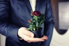 Rose dans une prise d'homme de pot à disposition Image stock