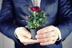 Rose dans une prise d'homme de pot à disposition Image libre de droits