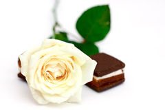 Rose de blanc Image stock