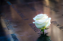 Rose de blanc d'anniversaire près du nom de la victime gravée sur le parapet en bronze de 9/11 mémorial au World Trade Center - N Image stock