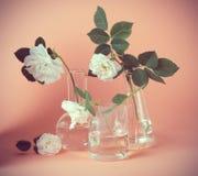 Rose de blanc dans le flacon de laboratoire sur un fond rose Photo de style d'insta de hippie Photos stock