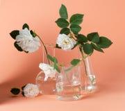 Rose de blanc dans le flacon de laboratoire sur un fond rose Photo de style de hippie Photo libre de droits