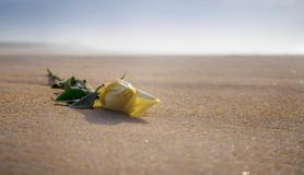 Rose de blanc sur la plage sablonneuse au coucher du soleil photo stock