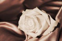Rose de blanc, symbole de la franchise Images libres de droits