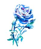 Rose de bleu - illustration de peinture de main d'aquarelle Photos libres de droits