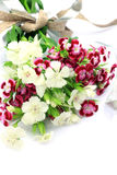 Rose de Chine Image stock