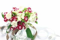 Rose de Chine Photo stock