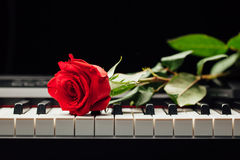 Rose de clés et de rouge de piano Photographie stock libre de droits