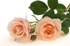 Rose de couleur de pêche d'isolement sur le blanc Photo libre de droits