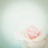 Rose de couleur de vintage dans le style doux de couleur sur la texture de papier de mûre Photographie stock libre de droits