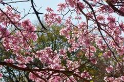 Rose de Rose dans le jardin photos libres de droits