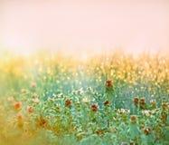 Rosée de début de la matinée sur la pelouse dans le meadoe Photographie stock libre de droits