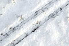 Rose de flétrissement de rouge sur la neige blanche Images libres de droits
