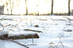 Rose de flétrissement de rouge sur la neige blanche Photographie stock libre de droits