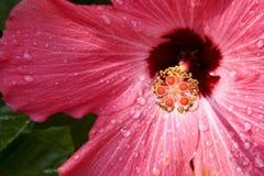 rose de fleur Images libres de droits