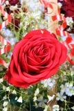 Rose de floraison Photographie stock libre de droits