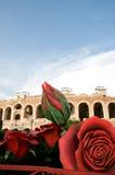 Rose de géant et l'arène Photos stock