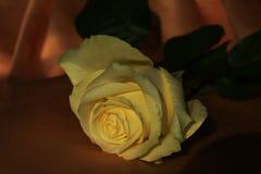 Rose de jaune à un arrière-plan de clair-obscur photos stock