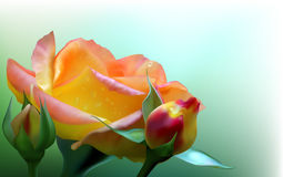 Rose de jaune Illustration Stock