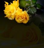 Rose de jaune Images stock