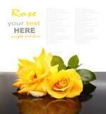 Rose de jaune Image libre de droits