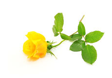 Rose de jaune Images stock