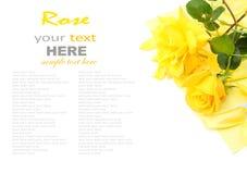 Rose de jaune Photos libres de droits