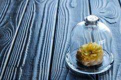 Rose de jaune sous un chapeau en verre Photographie stock