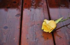 Rose de jaune sur le bois humide Images stock