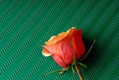 Rose de jaune sur un fond vert Photos libres de droits