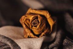 Rose de las hojas foto de archivo