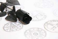 Rose de noir Photo stock