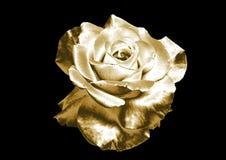 Rose de oro Foto de archivo libre de regalías