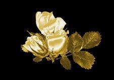Rose de oro Foto de archivo